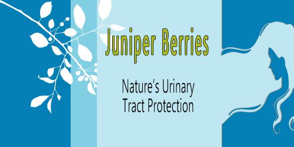 slide-juniper-berries-urinary-tract